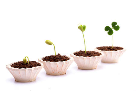 Plant growth-Baby plants in small pots photo
