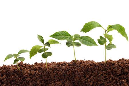pflanze wachstum: Sequenz eines Pflanzenwachstum �ber wei�em Hintergrund Lizenzfreie Bilder