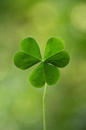 Three leaf clover