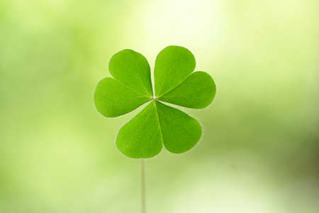 four leafed: Three leaf clover
