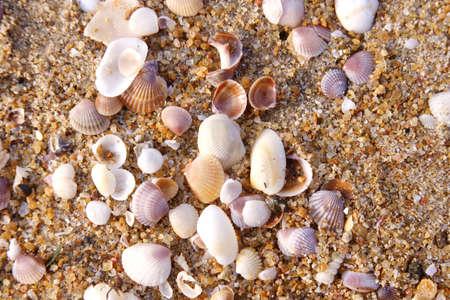 Overzeese shells op zand