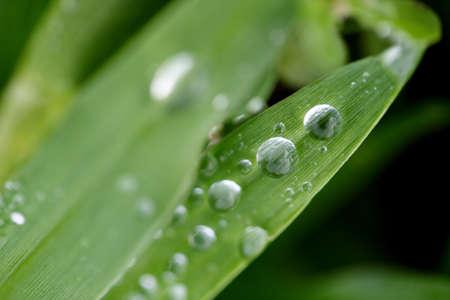 druppels water op het groene gras blade Stockfoto