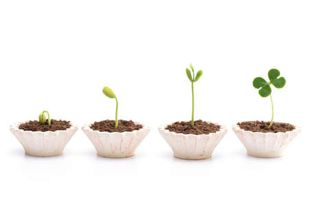 plant growth: Evaluation Process-Stages of the plant development