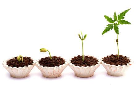 Tast de baby planten in kleine potten