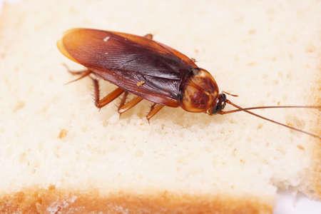 Close-up van kakkerlak op een sneetje brood