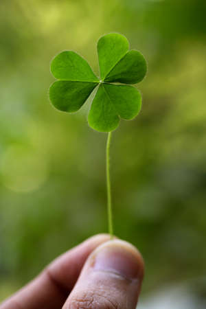 fortunateness: Three leaf clover