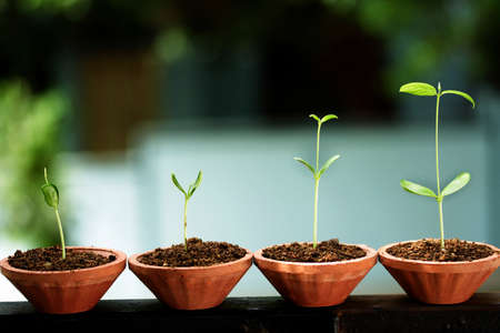 life growth: Plant growth-Stages of the plant development