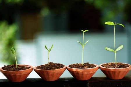 Tast Stadia van de ontwikkeling van de plant Stockfoto