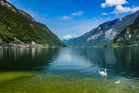 Two white swans on Lake Hallstatt and a scene of the Hallstatt village in Austria Kho ảnh