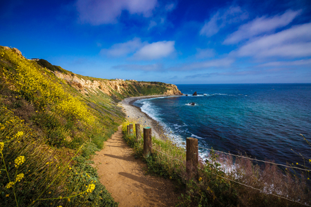 Hiking trail surrounded by beautiful yellow wildflowers with beach view during the California