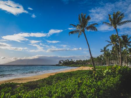 Beautiful palm trees lining the coast at Wailea Beach, Maui, Hawaii Reklamní fotografie