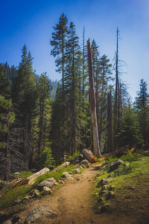 Clearing in the woods along the Tokopah Valley Trail with trees and mountains in the background, Sequoia National Park, California