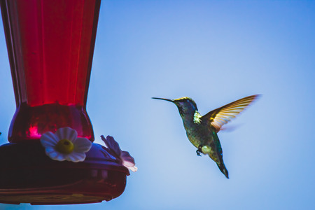 Hummingbird feeding on a red hummingbird feeder