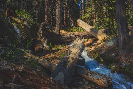 Downed trees surrounding a creek in the dense forest along the Tokopah Valley Trail, Sequoia National Park, California