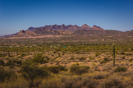 Beautiful Saguaro cacti scattered throughout Lost Dutchman State Park, Arizona with mountains in the background on a sunny day with clear, blue sky Stock Photo
