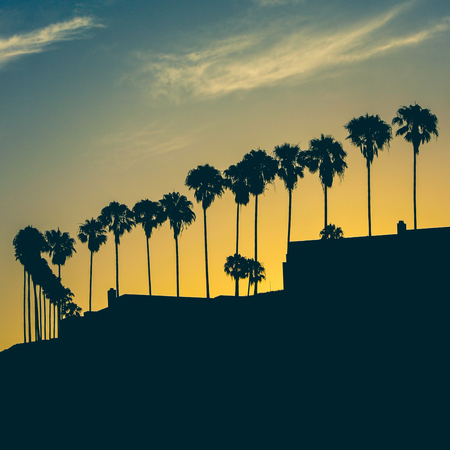 Silhouette of palm trees in a row backlit by the sun rising in the background, Playa Vista, California
