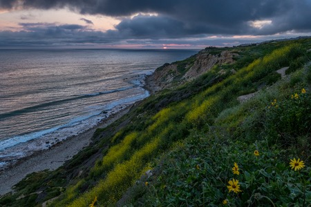 Stunning coastline view of Ocean Trails Reserve covered with yellow wildflowers at sunset with sunlight peeking through dramatic clouds, Rancho Palos Verdes, California Imagens