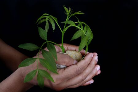 growth concept plant in hand