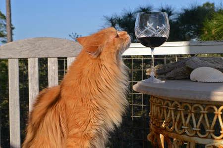 와인 외관의 유리와 노란 고양이