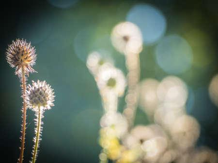 pflanze: OLYMPUS DIGITAL CAMERA