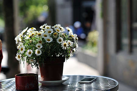 potting soil: potted flowers