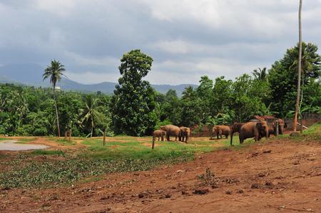 orphanage: Elephant Orphanage Stock Photo