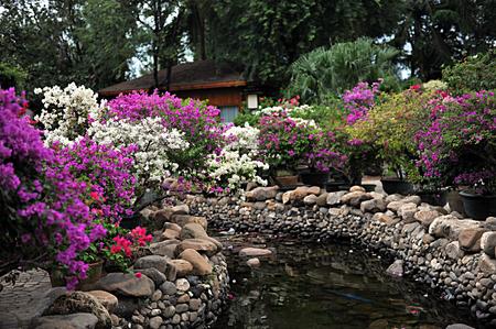 flowers in the garden 免版税图像