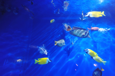 billfish: tropical fish