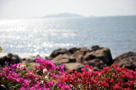 paysage marin: fleurs par marine chinoise Banque d'images