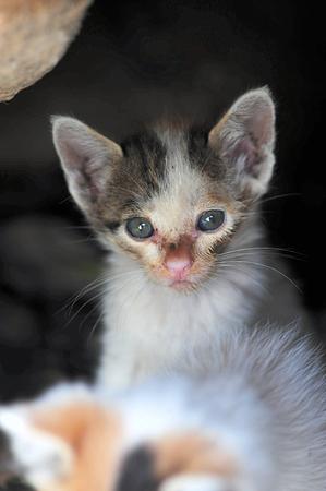 catling: kitten Stock Photo