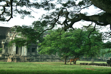 cambodian: Cambodian Angkor Wat