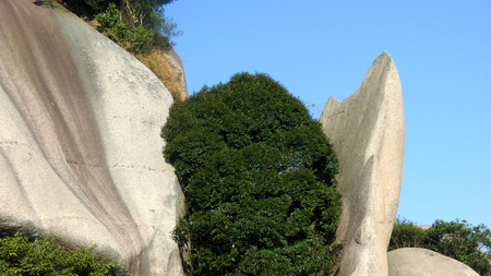 Tree plant in between rock formation