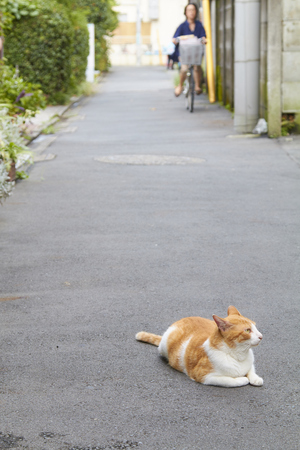 red cat: Red cat lying on street in Tokyo, Japan. Stock Photo