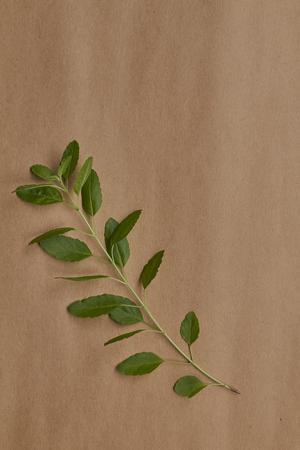 thai basil: Thai basil on kraft paper background.