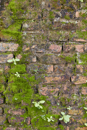 Red brick wall background. Stock Photo