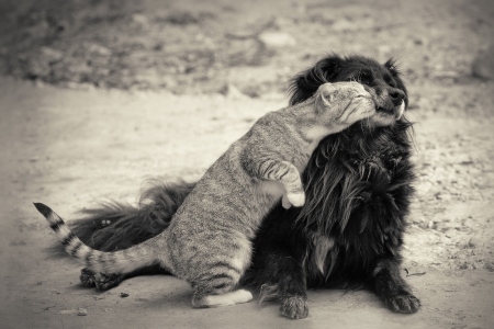 dog cat: cat kissing dog.sepia Stock Photo