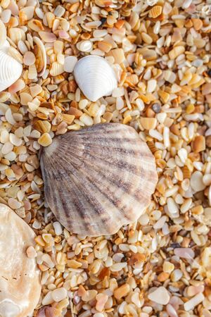 Sand, pebbles, shells, sea coast close-up. photo