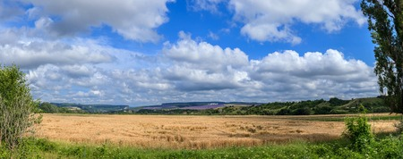 lavande: panoramic shot of a wheat field on a background cloudy sky Stock Photo