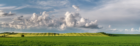 sways: Panorama. Legumes and cereals field against the sky. Stock Photo