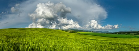 sways: Panorama. Wheat field on a background of cloudy sky. Stock Photo