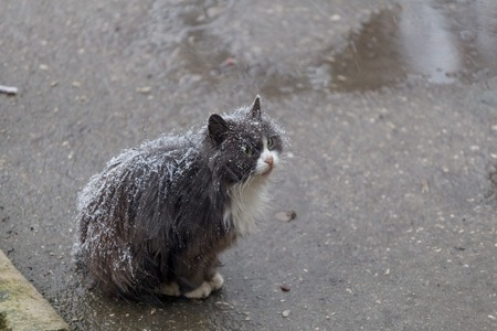 Homeless cat sitting on the street in the snow