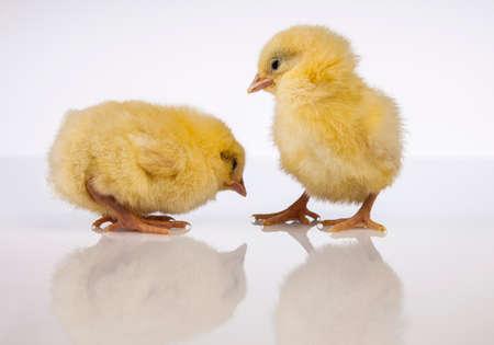 Ostern, Ei, Huhn, Kaninchen, Häschen Standard-Bild - 26103773