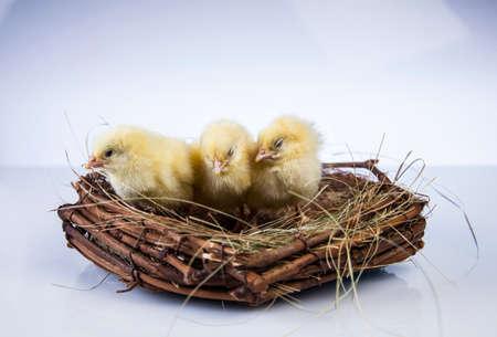 Ostern, Ei, Huhn, Kaninchen, Häschen Standard-Bild - 26103774
