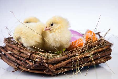 Ostern, Ei, Huhn, Kaninchen, Häschen Standard-Bild - 26103775