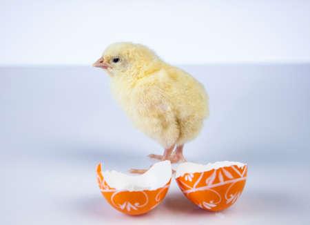 Ostern, Ei, Huhn, Kaninchen, Häschen Standard-Bild - 26103780