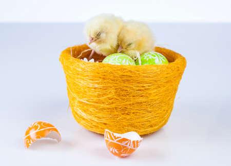 Easter, Egg, Chicken, Rabbit, Bunny photo