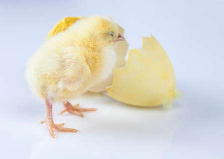 Ostern, Ei, Huhn, Kaninchen, Häschen Standard-Bild - 26103750