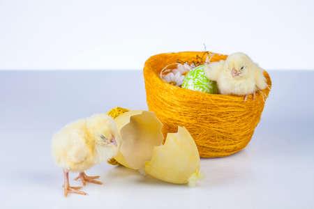 Ostern, Ei, Huhn, Kaninchen, Häschen Standard-Bild - 26103751