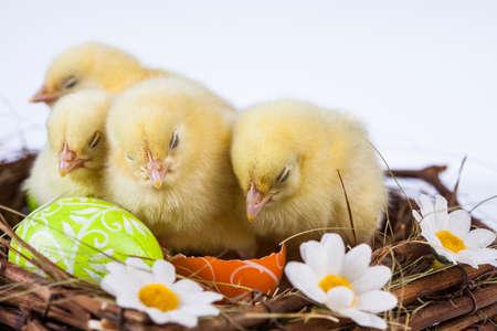 Ostern, Ei, Huhn, Kaninchen, Häschen Standard-Bild - 26103752