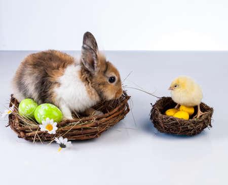 Ostern, Ei, Huhn, Kaninchen, Häschen Standard-Bild - 26103753
